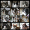 kittens 2013.PNG